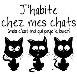 t-shirt J'habite chez mes chats